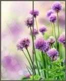 Фотофасады Цветы