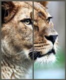 Фотофасады животные